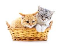 Gatinhos em uma cesta Imagem de Stock Royalty Free