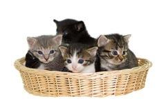 Gatinhos em uma cesta. Fotos de Stock Royalty Free