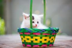 Gatinhos em uma cesta colorida Dia de verão de Sun Fotografia de Stock Royalty Free