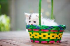 Gatinhos em uma cesta colorida Dia de verão de Sun Foto de Stock Royalty Free