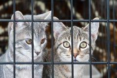 Gatinhos em uma gaiola Imagens de Stock