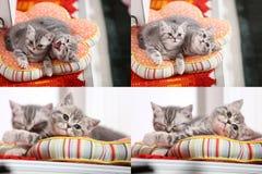 Gatinhos, gatos e descansos, multicam, grade 2x2 Imagens de Stock