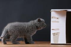 Gatinhos na caixa Foto de Stock