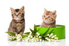 Gatinhos na caixa de presente verde no branco. Foto de Stock