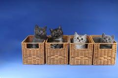 Gatinhos no caixas de madeira Fotografia de Stock Royalty Free