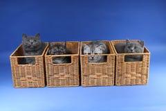 Gatinhos no caixas de madeira Fotos de Stock Royalty Free