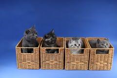 Gatinhos no caixas de madeira Fotos de Stock