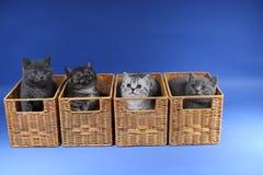 Gatinhos no caixas de madeira Imagem de Stock Royalty Free