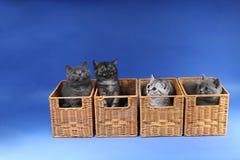 Gatinhos no caixas de madeira Imagens de Stock Royalty Free