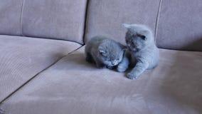 Gatinhos no sofá filme
