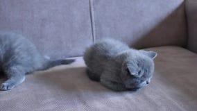 Gatinhos no sofá vídeos de arquivo