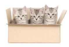 Gatinhos pequenos Fotografia de Stock Royalty Free