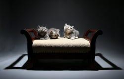 Gatinhos pequenos bonitos que olham acima Fotografia de Stock Royalty Free