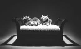Gatinhos pequenos bonitos que olham acima Fotografia de Stock