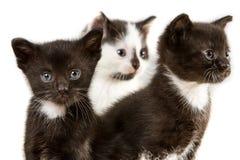 Gatinhos pequenos da ?rvore Imagens de Stock Royalty Free