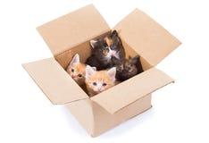 Gatinhos pequenos em uma caixa Imagens de Stock Royalty Free