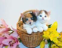 Gatinhos pequenos em uma cesta Imagens de Stock Royalty Free