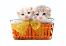 Gatinhos pequenos em uma cesta Imagem de Stock Royalty Free