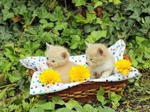 Gatinhos pequenos na cesta Imagens de Stock