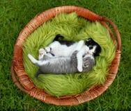 Gatinhos pequenos que abraçam ao ar livre na luz natural Imagem de Stock
