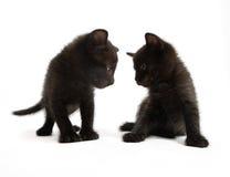 Gatinhos pretos imagem de stock