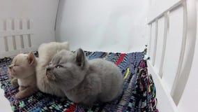 Gatinhos que comem alimentos para animais de estimação do assoalho filme
