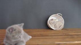 Gatinhos que jogam com uma cubeta de madeira video estoque