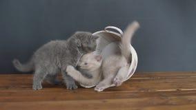 Gatinhos que jogam com uma cubeta de madeira vídeos de arquivo