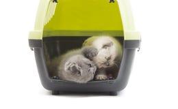 Gatinhos que jogam em uma caixa plástica Fotografia de Stock Royalty Free