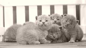 Gatinhos que lutam no fundo de madeira, cerca branca vídeos de arquivo