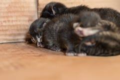 Gatinhos recém-nascidos cegos pequenos que dormem em uma caixa de cartão Fotos de Stock