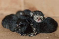 Gatinhos recém-nascidos cegos pequenos que dormem em uma caixa de cartão Foto de Stock Royalty Free