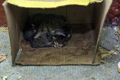 Gatinhos recém-nascidos em uma caixa Fotografia de Stock Royalty Free