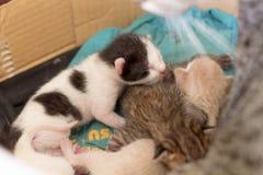 Gatinhos rec?m-nascidos em uma caixa fotos de stock