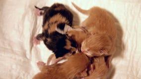 Gatinhos recentemente carregados com foco no gatinho do gengibre vídeos de arquivo