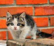 Gatito. fotografía de archivo