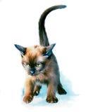 Gatito libre illustration