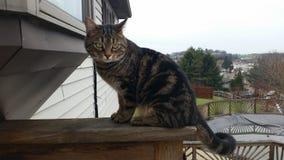 gatito Foto de archivo
