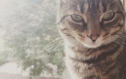 gatito Foto de archivo libre de regalías