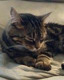 gatito Fotos de archivo libres de regalías
