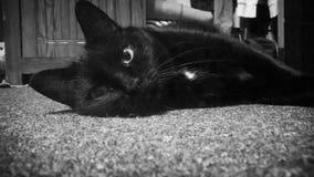 gatito Imagenes de archivo
