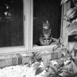 gatito Fotografía de archivo libre de regalías
