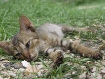 Gatito abandonado Imágenes de archivo libres de regalías