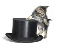 Gatito además de un sombrero de copa negro Foto de archivo