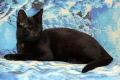 Gatito adolescente joven del shorthair en un fondo azul Imagen de archivo