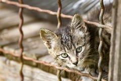Gatito adorable Fotografía de archivo