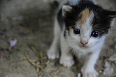 Gatito adorable Foto de archivo