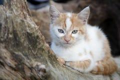 Gatito adorable Fotografía de archivo libre de regalías
