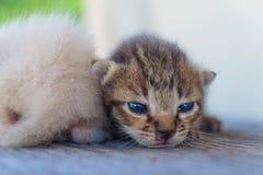 Gatito adorable dos slying Fotos de archivo libres de regalías