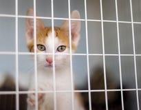 Gatito adorable en jaula en el refugio fotos de archivo